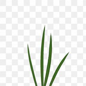 Athletes Material Plane - Leaf Grasses Plant Stem Family PNG