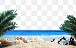Ocean Beach Plant - Ocean Beach Sandy Beach Sea PNG