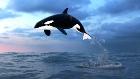 Whale - Toothed Whale Short-beaked Common Dolphin Killer Whale Common Bottlenose Dolphin Baby Orca PNG