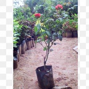Pot Plant - Houseplant Flowerpot Shrub PNG
