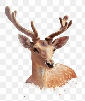 Deer - Sika Deer Download PNG
