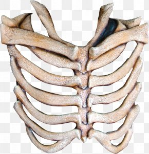 Mask - Human Skeleton Mask Bone Rib PNG