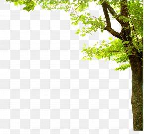 Fresh Green - Nature Presentation Tree PNG