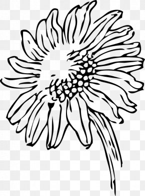 Sunflower Color Page Printable - Black And White Drawing Clip Art PNG