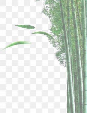 Bamboo - Bamboo Bamboe Euclidean Vector Plant PNG