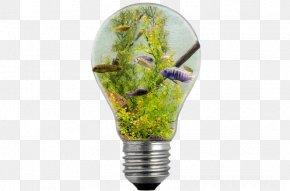 Light Bulb In The Ocean - Incandescent Light Bulb Electric Light Illustration PNG