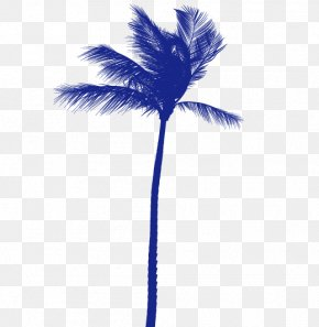 Coconut Tree - Arecaceae Coconut Tree PNG