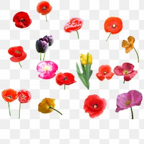 Tulip Flowers - Poppy Flower Bouquet Tulip PNG