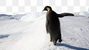 Antarctic Iceberg Four - Penguin Microsoft Windows Windows 8 Wallpaper PNG