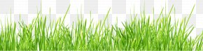 Grass Image Green Picture - Lawn Stock Photography Shutterstock PNG