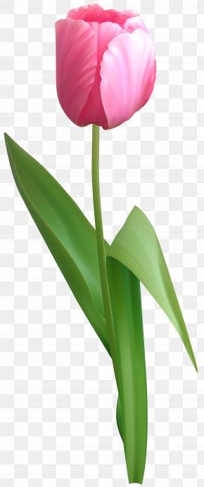 Pink Tulip Clip Art Image - Tulip Clip Art PNG
