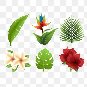 Tropical Plants - Flower PNG
