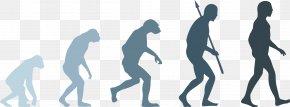 Evolution - Neandertal Human Evolution Homo Sapiens PNG