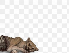 Lion - Lion Felidae Big Cat Mammal PNG