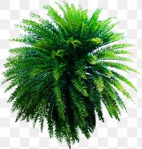 Green Plant Poster Beach Trees - Beach Plant Praia Do Coqueiro Auringonvarjo PNG