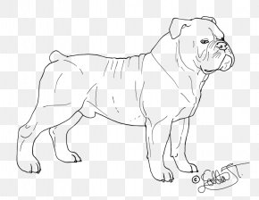 English Bulldog - Dog Breed Puppy Non-sporting Group Line Art PNG