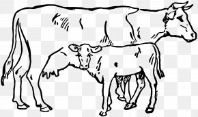 Calf - Hereford Cattle Calf Angus Cattle Clip Art PNG