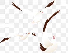 The Circling Wild Goose - Beak Goose Bird Cygnini Duck PNG