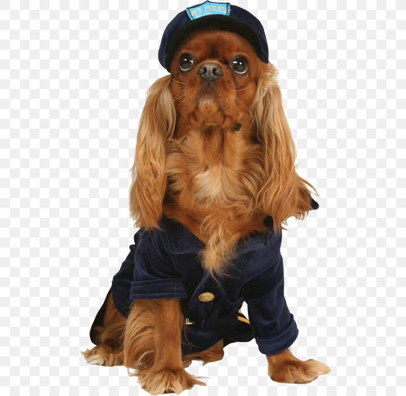 Dog Cat Puppy Kitten Pet, PNG, 800x800px, Dog, Bark, Carnivoran, Cat, Cavalier King Charles Spaniel Download Free
