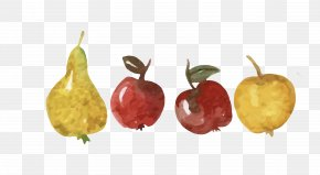 Vector Colored Hand-painted Fruit Apple Pear - Apple Asian Pear Fruit PNG