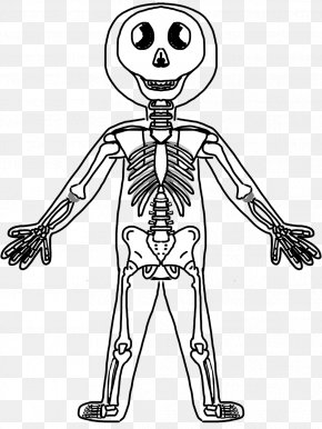 Skeleton Picture For Kids - Human Skeleton Human Body Bone Clip Art PNG