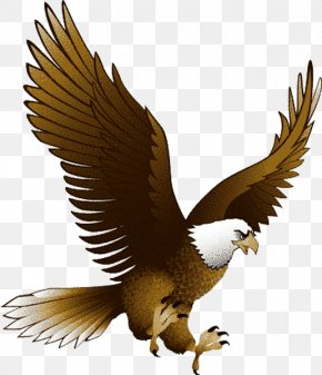 Eagle Image With Transparency, Free Download - Eagle Clip Art PNG