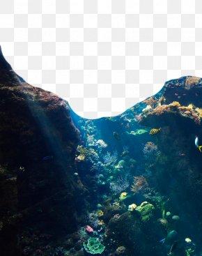 Mountain Jungle - Jellyfish Underwater Ocean Coral Reef PNG