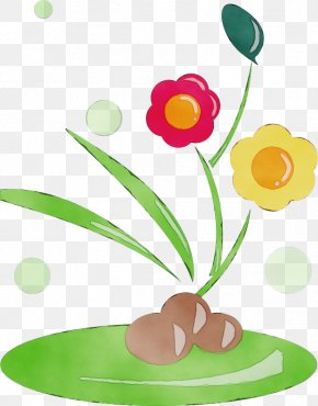 Tulip Cut Flowers - Flower Plant Stem Plant Cut Flowers Tulip PNG