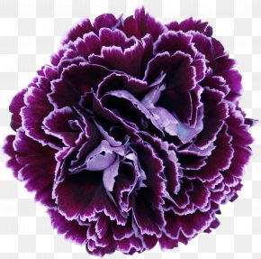 Blueberry - Growing Carnations Cut Flowers Floral Design PNG