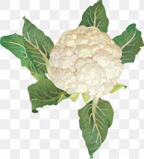 Cauliflower Image - Cauliflower Cabbage Broccoli Vegetable PNG