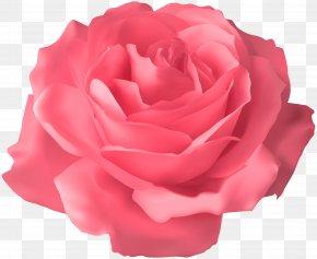 Soft Pink Rose Transparent Clip Art Image - Blue Rose Clip Art PNG