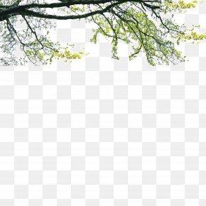 Landscape Foreground Tree - Tree Poster Landscape PNG