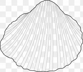 Shell - Drawing Monochrome Photography Line Art PNG