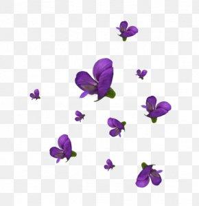 Violet - Violet Cut Flowers Petal Viola PNG