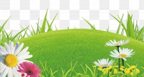 Lawn Flowers - Shangyu Library Lawn Domain Name Registrar WHOIS PNG