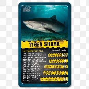 Shark - Shark Winning Moves Top Trumps Card Game PNG