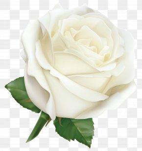 Large White Rose Clipart Image - Rose Pink Clip Art PNG