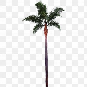 Palm Tree Images Best Clipart Free - Tree Arecaceae Clip Art PNG