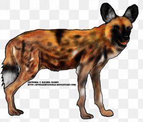 Wild Dog - Dog Breed Dhole African Wild Dog South African Cheetah PNG