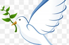 Paz - Pigeons And Doves Clip Art Free Content Vector Graphics Doves As Symbols PNG