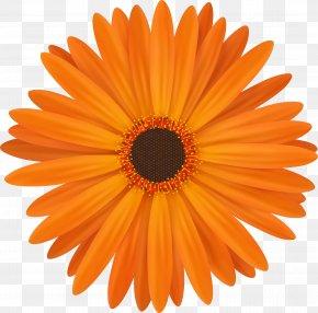 Chrysanthemum - Icon Design Iconfinder Icon PNG