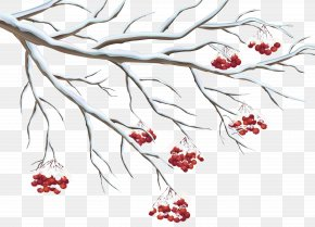 Snowy Holly Berries Clipart - Common Holly Clip Art PNG