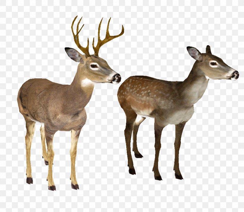 Whitetail Deer Clip Art 19 Buck Clipart Whitetail Deer - Deer PNG Image |  Transparent PNG Free Download on SeekPNG