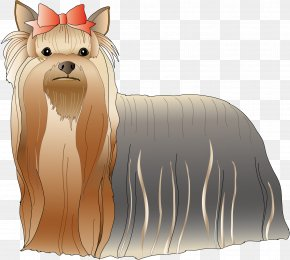 Dog - Yorkshire Terrier Cairn Terrier Dog Breed Toy Dog PNG