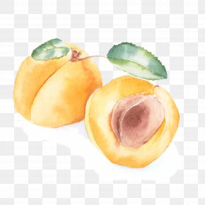 Peach - Peach Apricot Watercolor Painting PNG