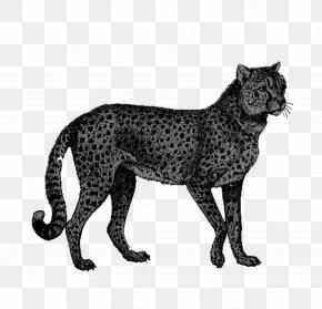 Cheetah - Cheetah African Leopard Lion PNG