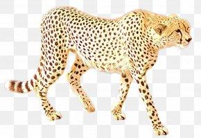 Snout African Leopard - Cheetah Leopard Jaguar Cat Tiger PNG