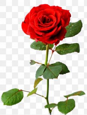 Rose Flower - Desktop Wallpaper Rose Flower Bouquet PNG