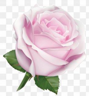 Large Soft Pink Rose Clipart Image - Pink Garden Roses Flower Color PNG