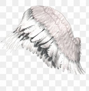 Wings - Gothic Fiction Angel Gothic Art Dream Art Photography PNG